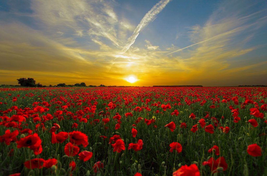 clouds hd wallpaper horizon 35599 1024x676 - Marking the End of the WW1 Centenary